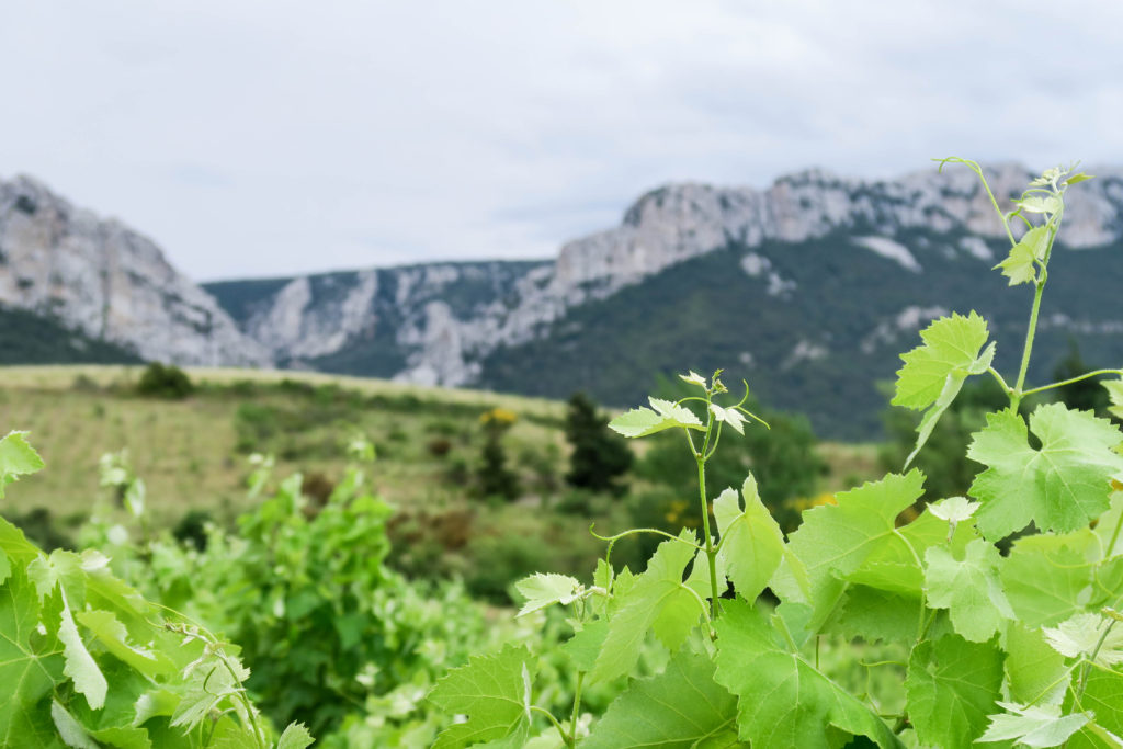 French Countryside, South of France. Travel Diary by Rosie André (countryside, village, town, bucketlist, destination, photography, Europe, journal, paysage, landscape, nature, vineyards, wine, mountains, greenery, foliage, outdoors)