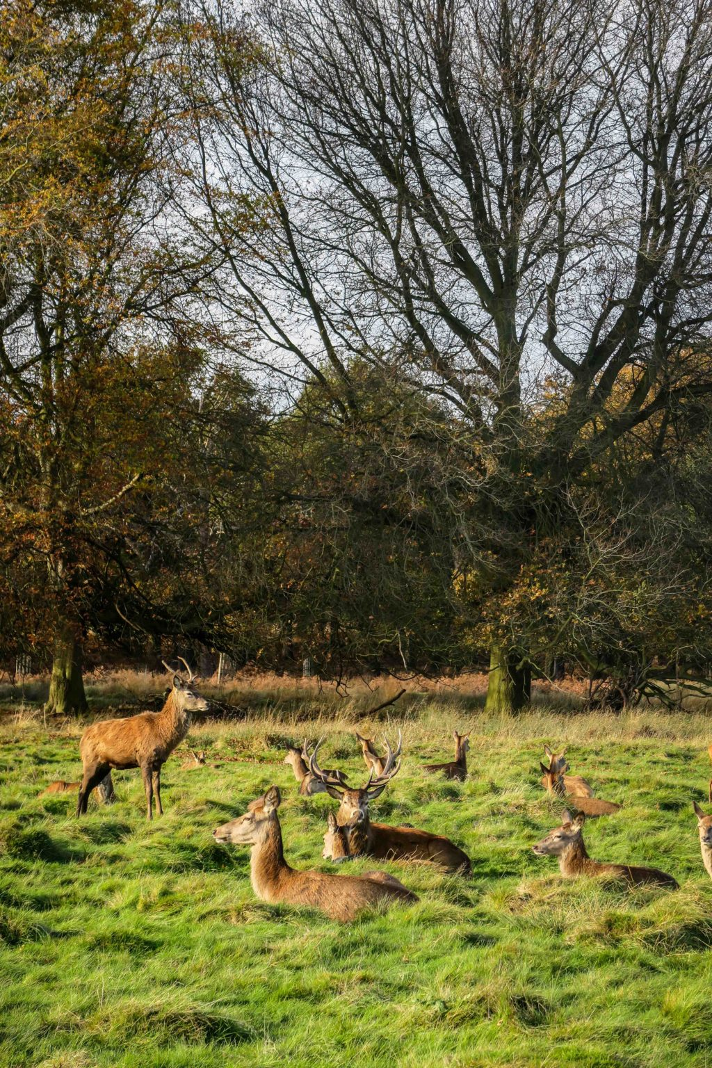 Richmond Park, London. Travel Diary & Blog by Rosie Andre (wildlife, nature, photo, photography, photographs, inspiration, wanderlust, autumn, deer, wild deer, wilderness, explore, discover, uk, london, england)