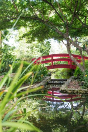 Rosie Andre. Travel Blog. Botanical Gardens, Miami Beach - USA. (Miami, Florida, wanderlust, travel, explore, globe, world, earth)